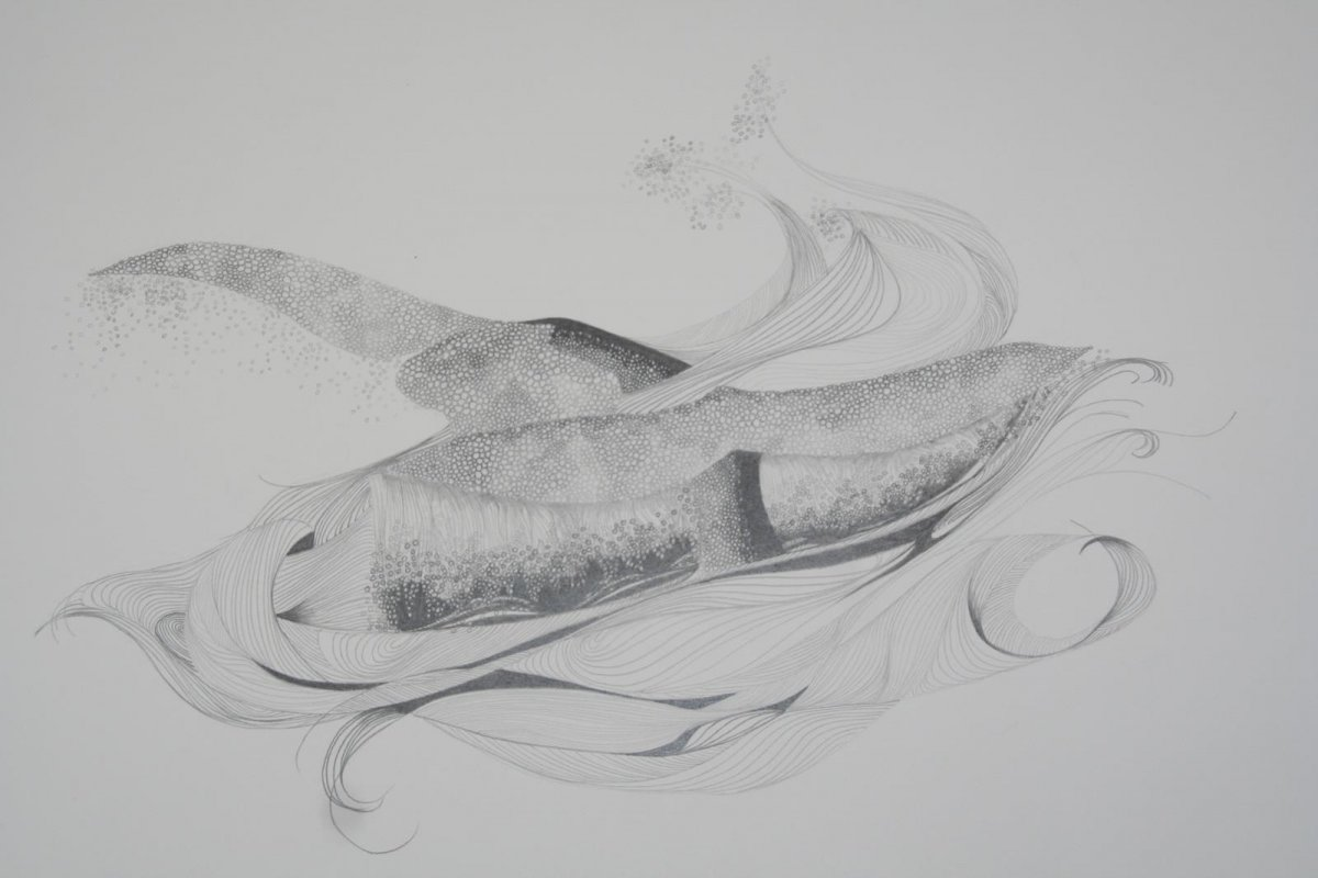 Southern Right Whales, drawing by artist Heather Wood
